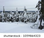 Beautiful Spruce Forest Covere...