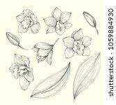 vector vintage set of orchids... | Shutterstock .eps vector #1059884930