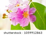 pink flowers on green leaves.... | Shutterstock . vector #1059912863