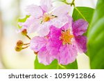pink flowers on green leaves.... | Shutterstock . vector #1059912866