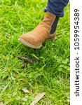 Boot To Step Dog Poo  In A...