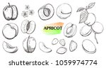 hand drawn  apricot set... | Shutterstock .eps vector #1059974774