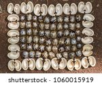 rubber tree seeds and bark in... | Shutterstock . vector #1060015919