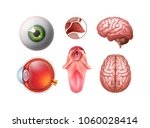 vector set of realistic... | Shutterstock .eps vector #1060028414