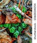 Small photo of Springtime.?wakening of plants