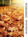 beautiful golden autumn or fall ... | Shutterstock . vector #1060058216