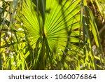 florida city  florida  usa  ...   Shutterstock . vector #1060076864