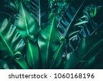 tropical jungle leaf  dark... | Shutterstock . vector #1060168196