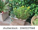 planting succulent plants | Shutterstock . vector #1060227068
