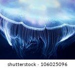 aurelia jelly fish  cnidaria ... | Shutterstock . vector #106025096
