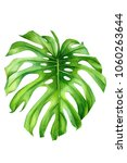 tropical plants  palm leaves ... | Shutterstock . vector #1060263644