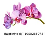 Tropical Plants  Orchid   Flor...