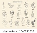 best medicinal herbs for hair... | Shutterstock .eps vector #1060291316