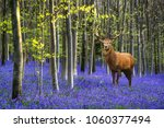 Red Deer Stag In Vibrant...