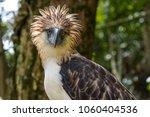 the philippine eagle ... | Shutterstock . vector #1060404536