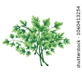 illustration of a green parsley ... | Shutterstock . vector #1060413254