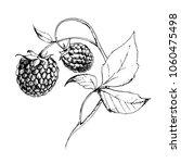 vector botanical ink drawn... | Shutterstock .eps vector #1060475498