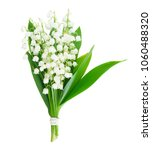 lilly of the valley flowers and ...   Shutterstock . vector #1060488320
