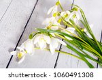 snowdrop flowers isolated on... | Shutterstock . vector #1060491308