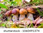 mushrooms in autumn forest   Shutterstock . vector #1060491374