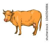 cow farm animal isolated on... | Shutterstock .eps vector #1060504886