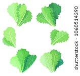fresh lettuce leaves collection ... | Shutterstock .eps vector #1060514390