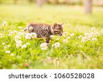 Stock photo cat in the grass 1060528028