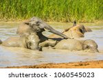 close up of african elephants... | Shutterstock . vector #1060545023