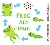 life cycle of a frog. cute... | Shutterstock .eps vector #1060546613