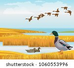 Waterscape with wild ducks. Vector illustration