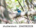 bird  collared kingfisher ... | Shutterstock . vector #1060582028