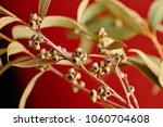 a branch of an eucalyptus with... | Shutterstock . vector #1060704608