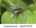 fly on a green leaf close up | Shutterstock . vector #106070930
