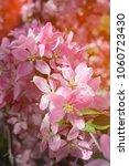 beautiful spring flowers...   Shutterstock . vector #1060723430