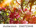 beautiful spring flowers...   Shutterstock . vector #1060723448