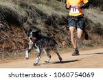 Stock photo dog and man taking part in a popular canicross race 1060754069