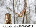 european kestrel  falco... | Shutterstock . vector #1060814729