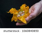 cooking stuffed zucchini... | Shutterstock . vector #1060840850