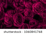 Stock photo roses isolated on a black background greeting card with roses 1060841768
