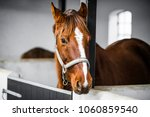 brown horse with a grime in a...   Shutterstock . vector #1060859540