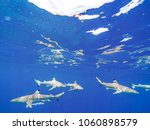 sharks swimming in bora bora... | Shutterstock . vector #1060898579