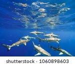 sharks swimming in bora bora... | Shutterstock . vector #1060898603