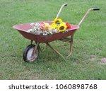 Old Red Wheelbarrow Full Of...