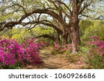 pathway through beautiful... | Shutterstock . vector #1060926686