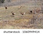 Small photo of Small deer herd