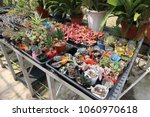 plant seedlings that can be... | Shutterstock . vector #1060970618