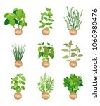 basil and mint  sage and chile...   Shutterstock .eps vector #1060980476