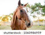 Stock photo close up of horse in a fenced paddock 1060986959