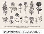 big set flowers. victorian... | Shutterstock .eps vector #1061089073