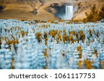 majestic view of vivid lupine... | Shutterstock . vector #1061117753